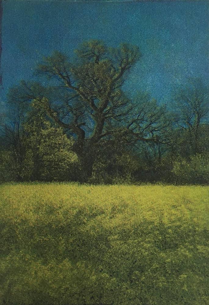 landscape, trees, oak tree, rapeseed, spring, sky, countryside,
