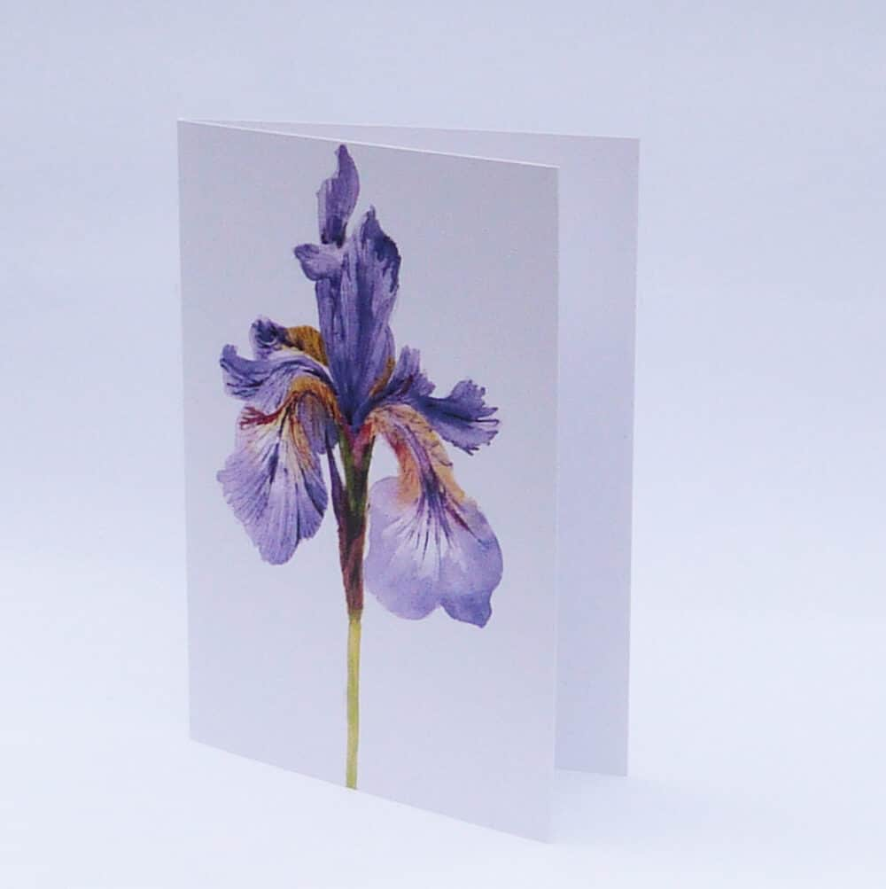 watercolour, Iris, blues, purple, greeting card, blank card, garden plants