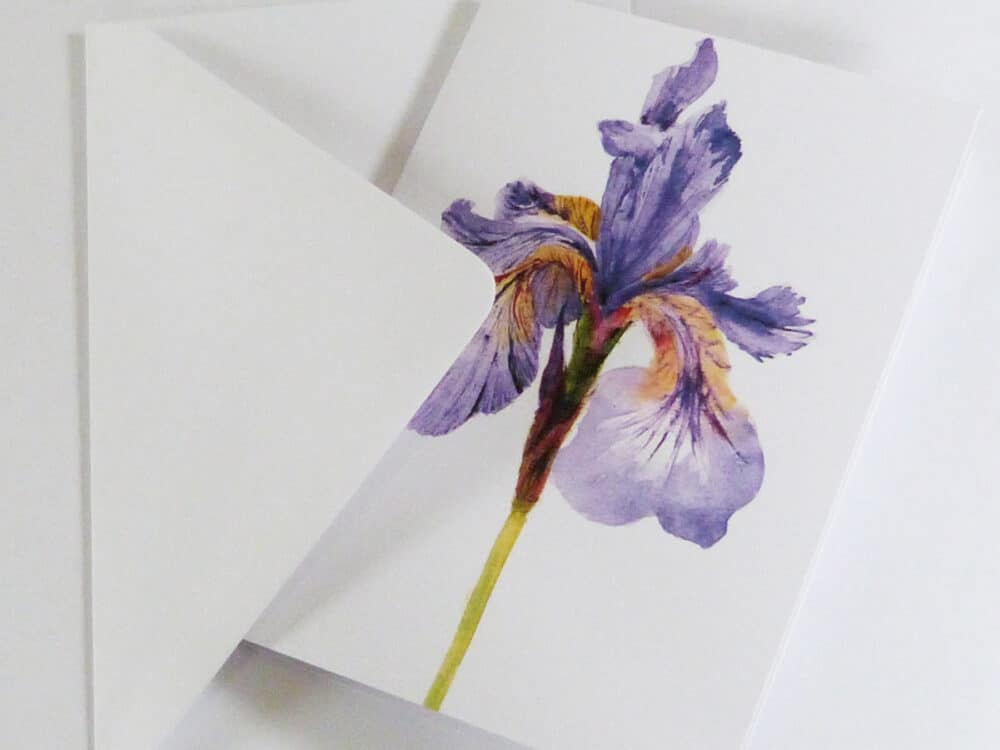 watercolour, Iris, blues, purple, greeting card, blank card, garden plants