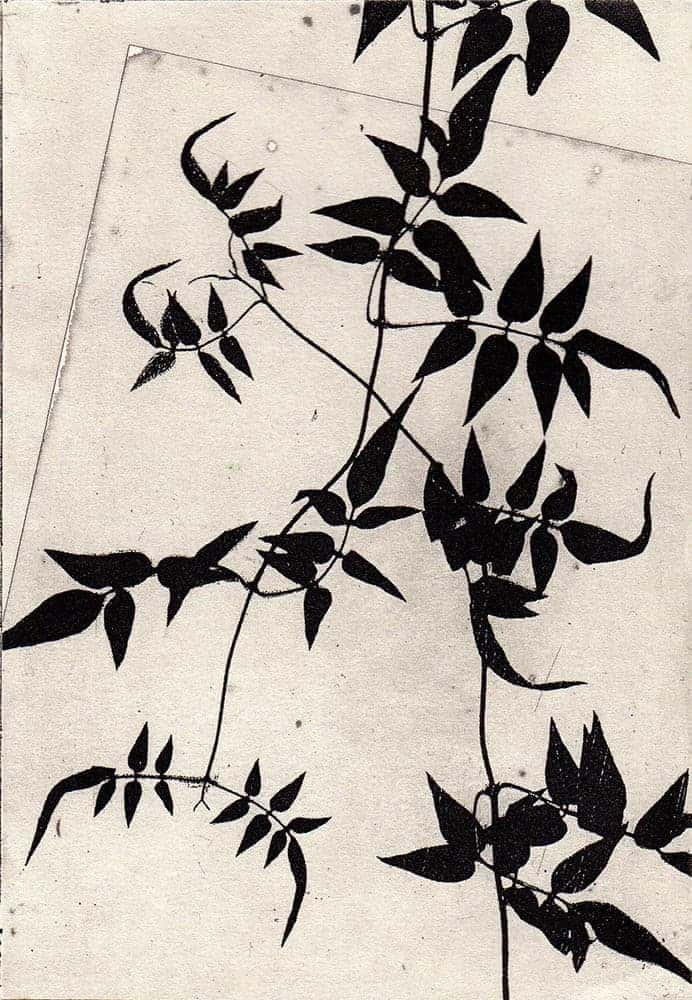 photopolymer etching, leaves, monochrome, print, printmaking,