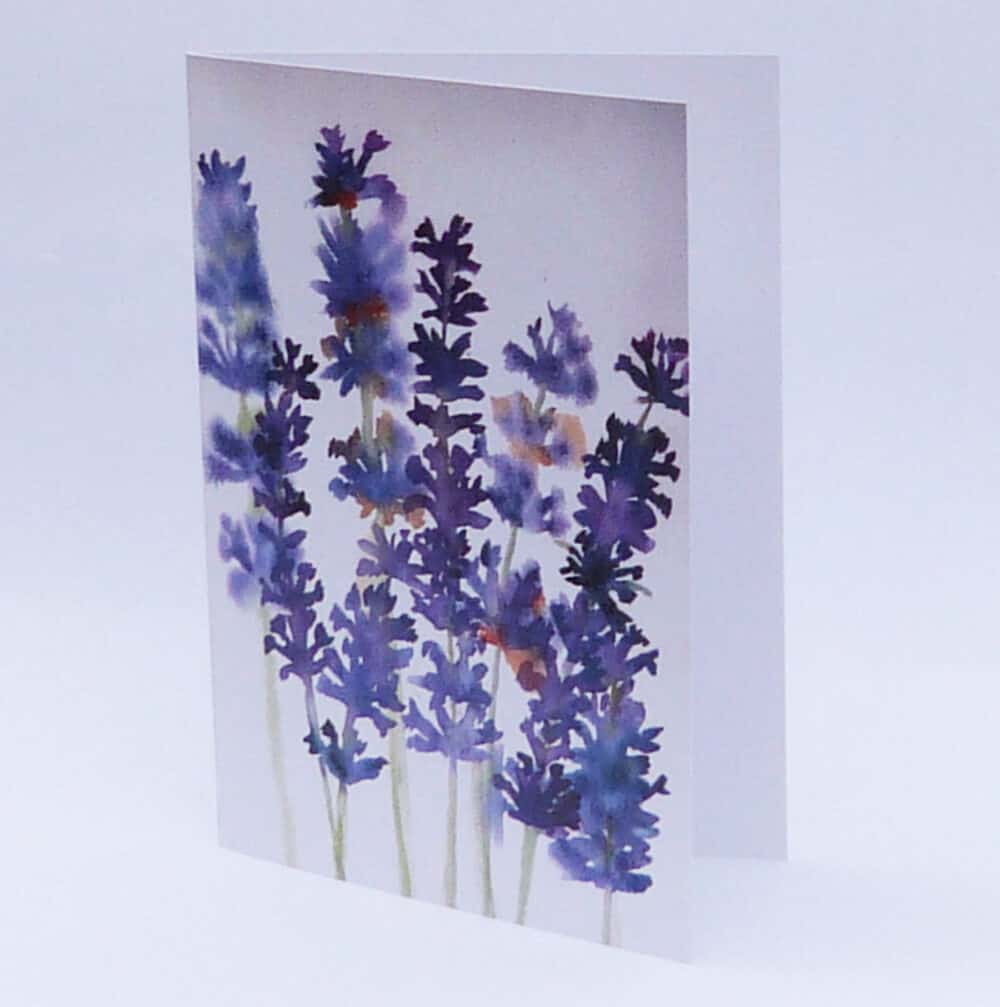 watercolour, lavender, purple, greeting card, blank card, garden plants