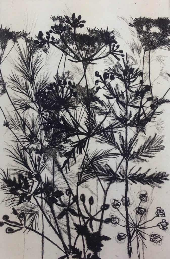 printmaking techniques, photopolymer etch, grasses, plants, wildflowers